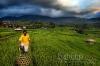 Paddy farmer
